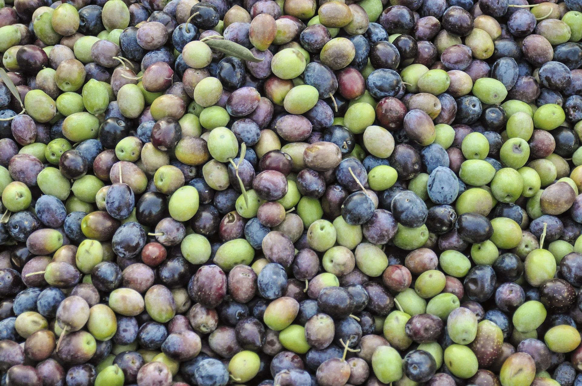 EL PRODUCTE DEL MES: l'oliva i derivats